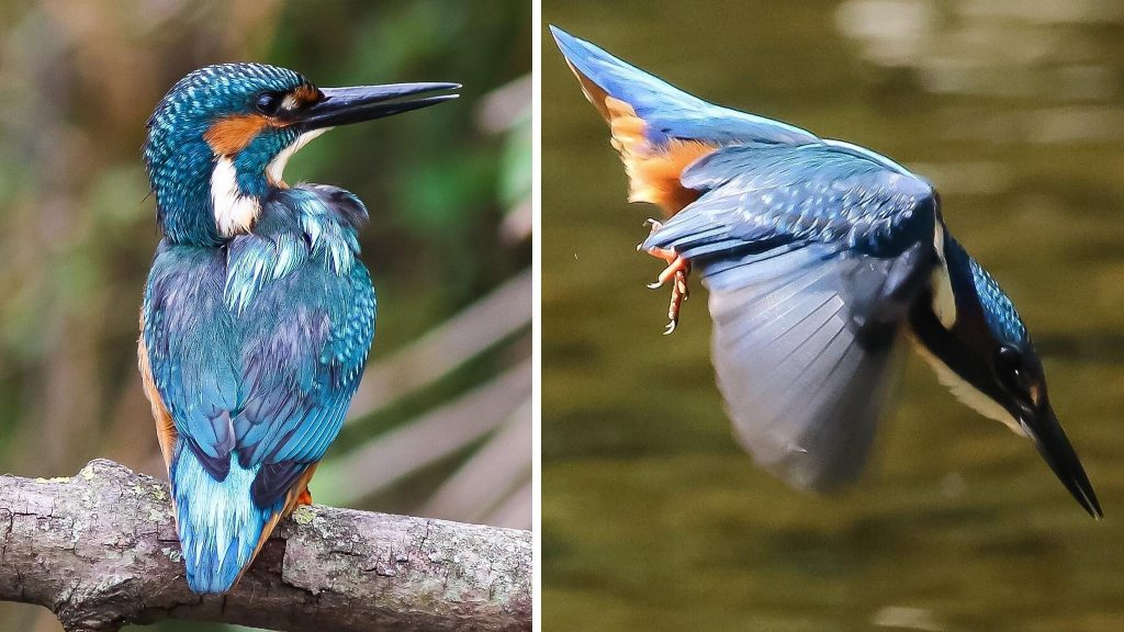 Helping wildlife thrive