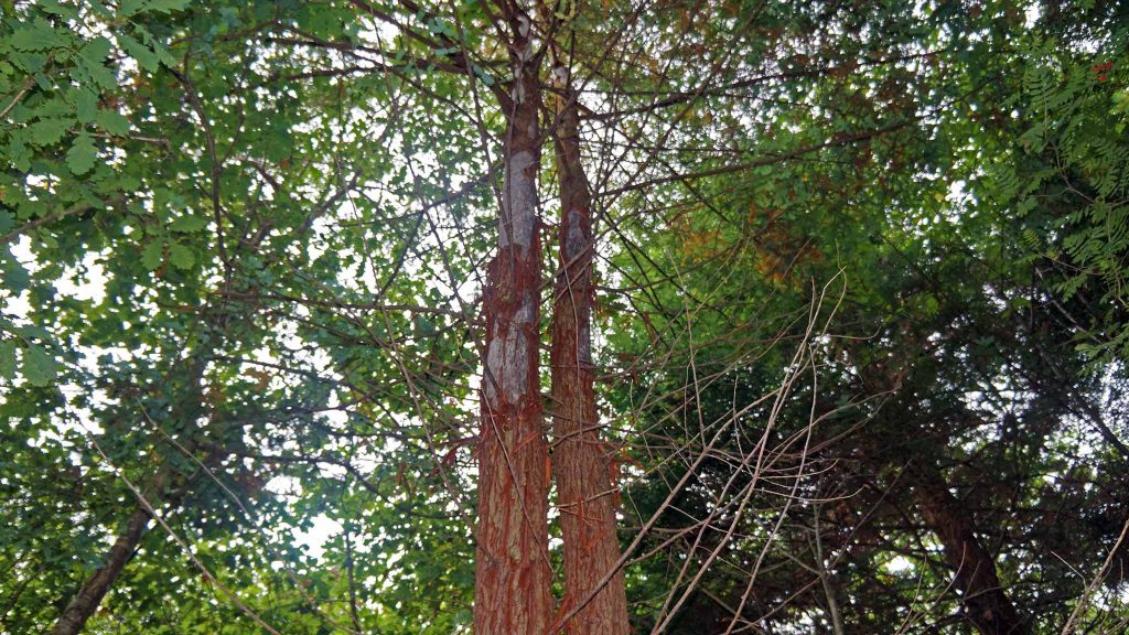 Protecting trees, organic crops and biodiversity