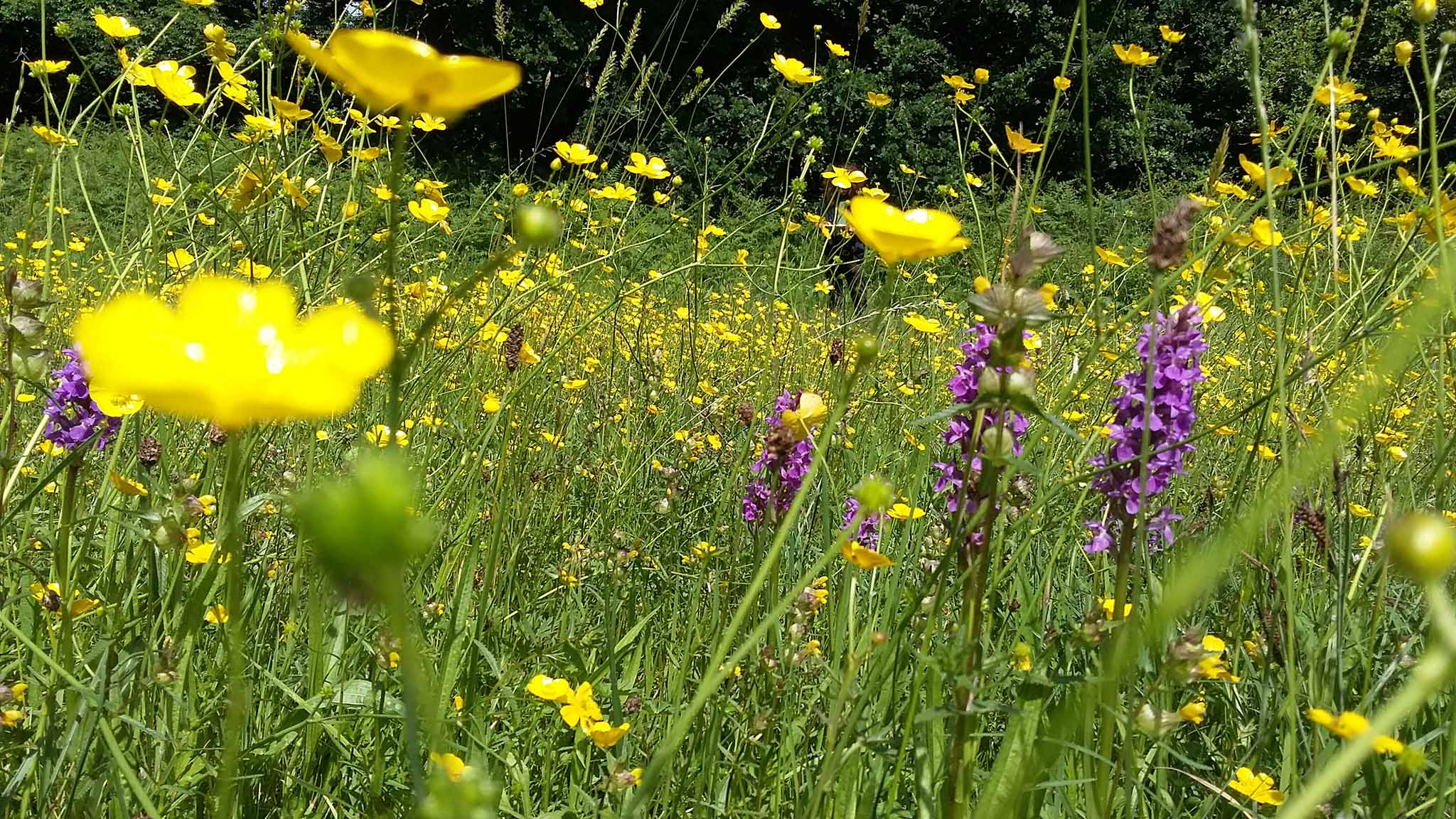 Why healthy grassland means a healthy ecosystem